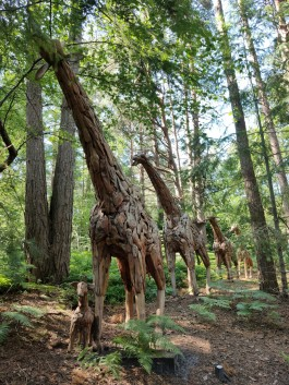 Family of 5 Giraffes at The Sculpture Park
