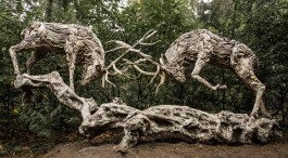 Rutting Stags by James Doran-Webb