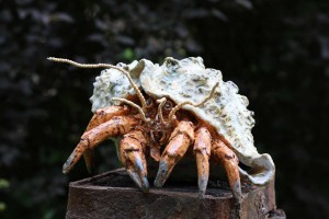 Hermit Crab by Colin Kellam at The Sculpture Park