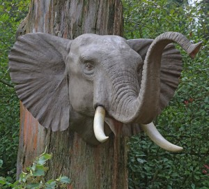 Elephant Head by Anon. Unknown
