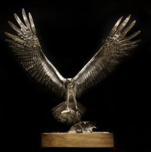 Osprey by Piers Mason