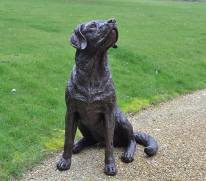 Tanya Russell, Labrador Looking Up, Bronze Resin, 80cm high, 75cm wide, 48cm deep, The Sculpture Park