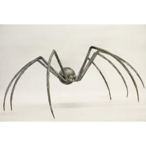 Spider by Nik Burns
