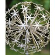 Allium Stem - Gold (close) by Ruth Moilliet at The Sculpture Park